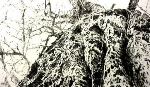 Baumfigur, 2013, Ölpastell auf Papier, 100 x 150 cm © Dieter Konsek